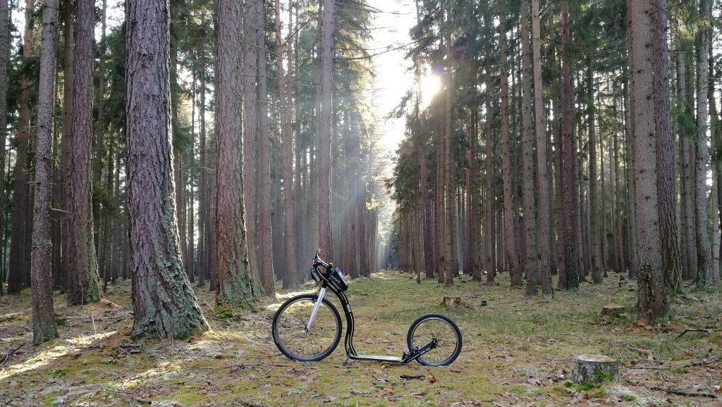 Trexx a mrazivý den v lese