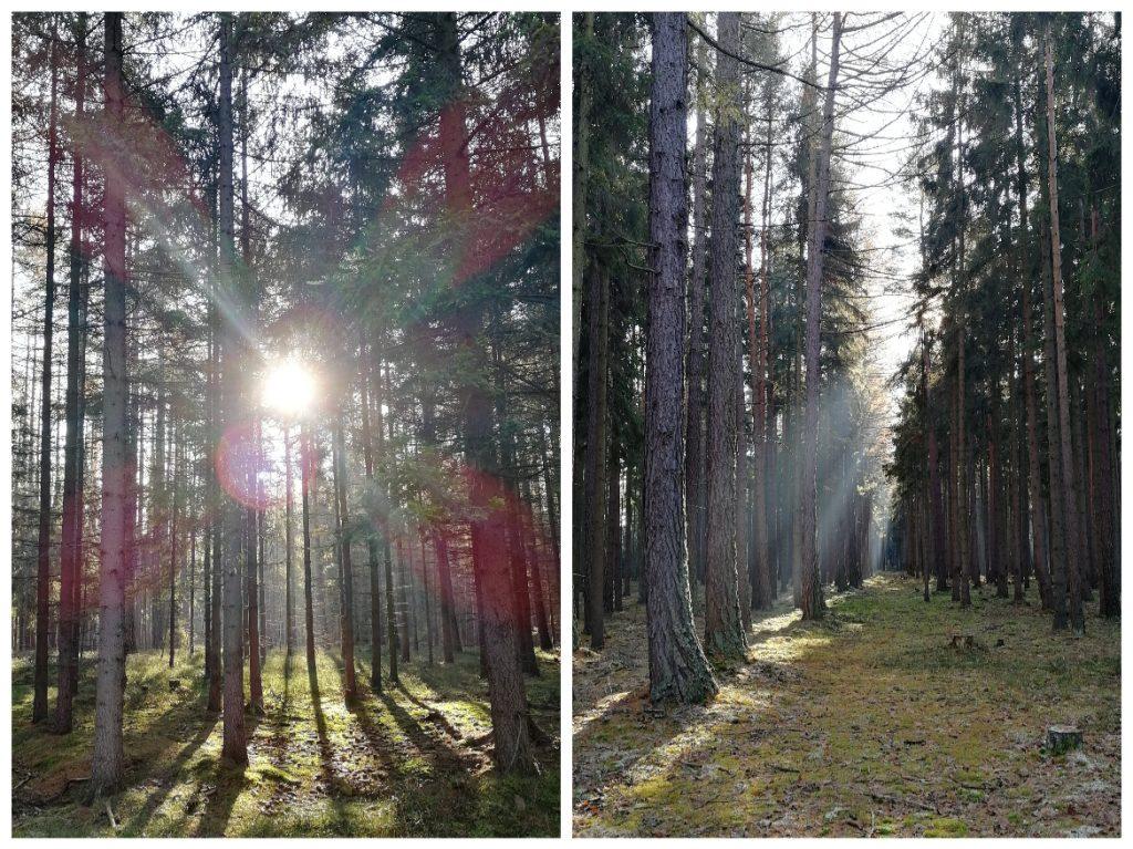 V Orlově vstupujete do brdských lesů