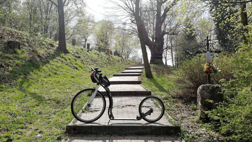 Cesta na Svatou Horu, v pozadí Svatováclavský dub, jeden z nejstarších v ČR
